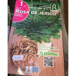 ROSA JERICO