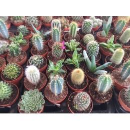 Cactus y Plantas Crasas 5.5