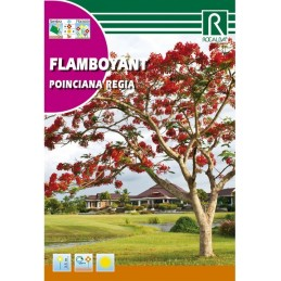 FLAMBOYANT POINCIANA