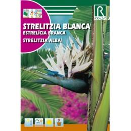 STERLIZIA BLANCA