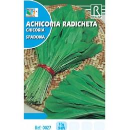 ACHICORIA RADICHETA